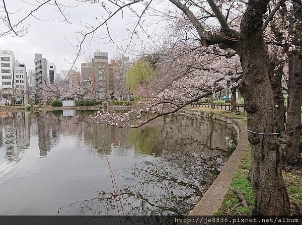 0323上野公園~不忍池69.jpg
