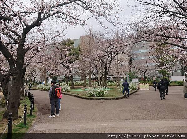 0323上野公園~不忍池71.jpg