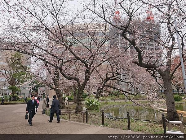 0323上野公園~不忍池72.jpg