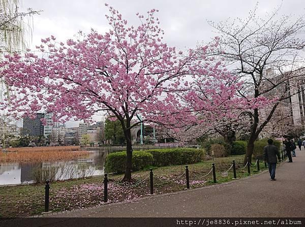 0323上野公園~不忍池73.jpg