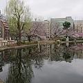 0323上野公園~不忍池75.jpg