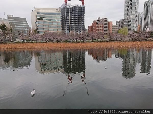 0323上野公園~不忍池79.jpg
