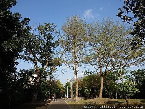 0331樂活公園31.jpg