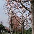 0329回斗南25.jpg