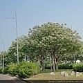 0329回斗南43.jpg