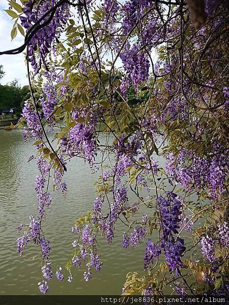 0330大湖公園8.jpg