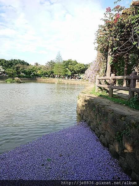 0330大湖公園9.jpg