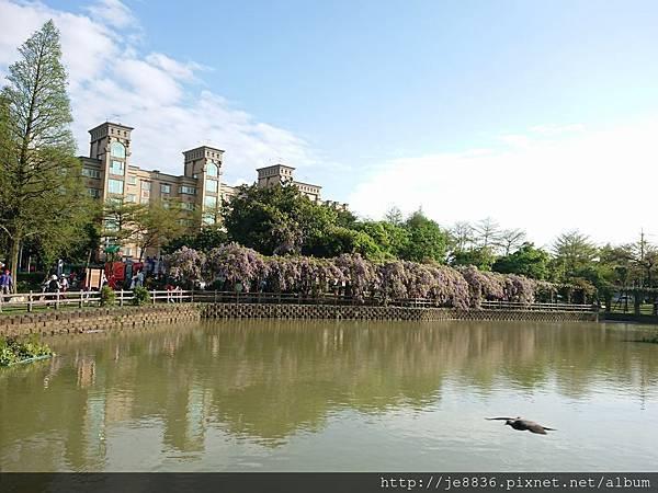 0330大湖公園17.jpg
