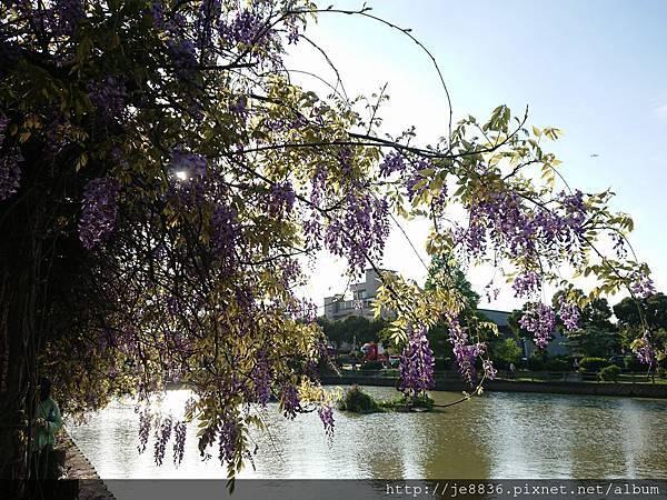 0330大湖公園18.jpg