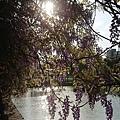 0330大湖公園20.jpg