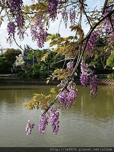0330大湖公園21.jpg