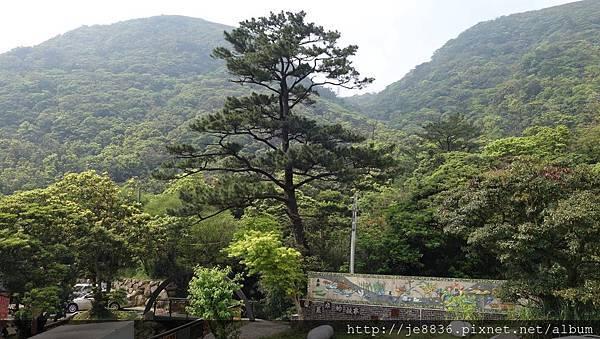 2018竹子湖海芋季11.jpg