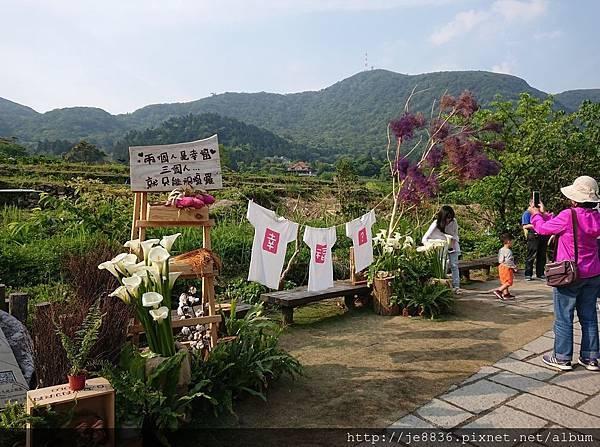 2018竹子湖海芋季78.jpg