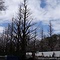0323靖國神社3.jpg