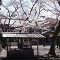 0323靖國神社13.jpg