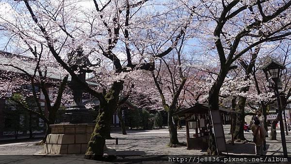 0323靖國神社12.jpg