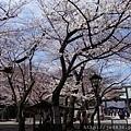 0323靖國神社11.jpg