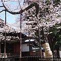 0323靖國神社15.jpg