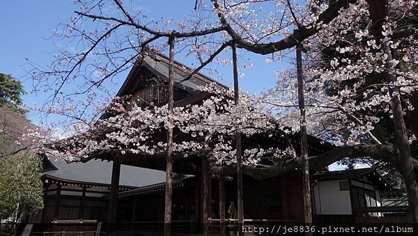 0323靖國神社16.jpg
