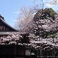 0323靖國神社17.jpg