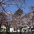 0323靖國神社18.jpg