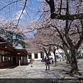 0323靖國神社20.jpg