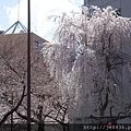 0323靖國神社22.jpg
