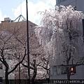 0323靖國神社23.jpg
