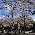 0323靖國神社34.jpg