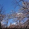 0323靖國神社35.jpg