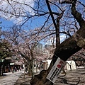 0323靖國神社36.jpg