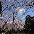 0323靖國神社37.jpg