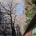 0323靖國神社38.jpg