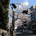 0323靖國神社39.jpg