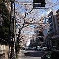 0323靖國神社41.jpg