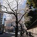 0323靖國神社43.jpg