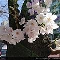0323靖國神社46.jpg