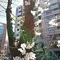0323靖國神社47.jpg