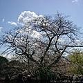 0323靖國神社48.jpg