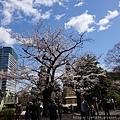 0323靖國神社49.jpg