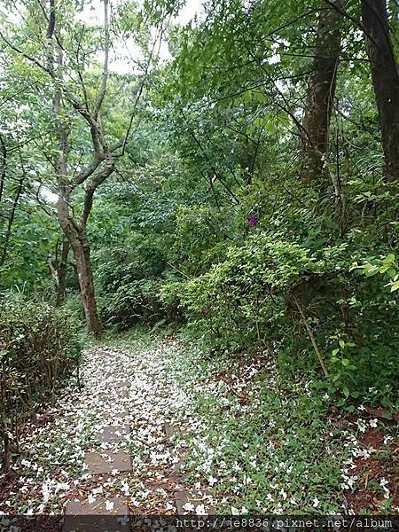 0424新林步道4.jpg