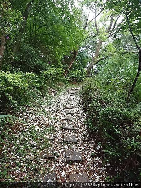 0424新林步道12.jpg