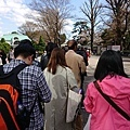 0323新宿御苑2.jpg