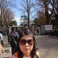 0323新宿御苑3.jpg
