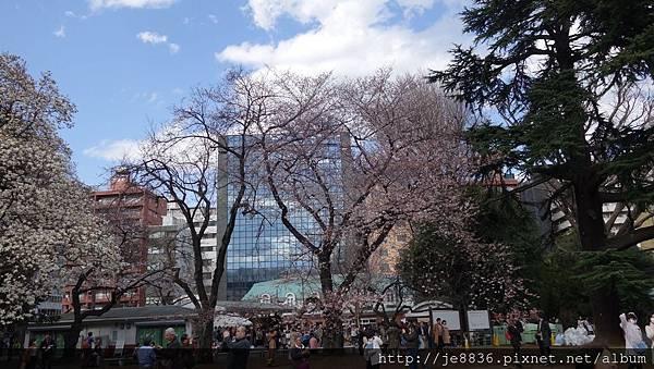 0323新宿御苑13.jpg
