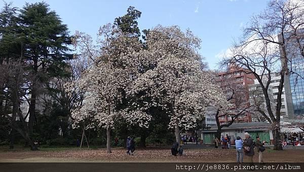 0323新宿御苑12.jpg