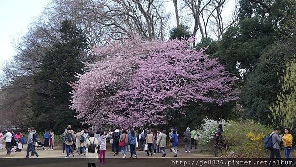 0323新宿御苑14.jpg