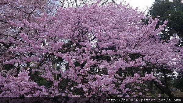 0323新宿御苑17.jpg
