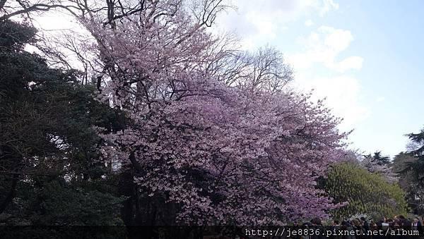 0323新宿御苑18.jpg