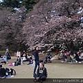 0323新宿御苑21.jpg